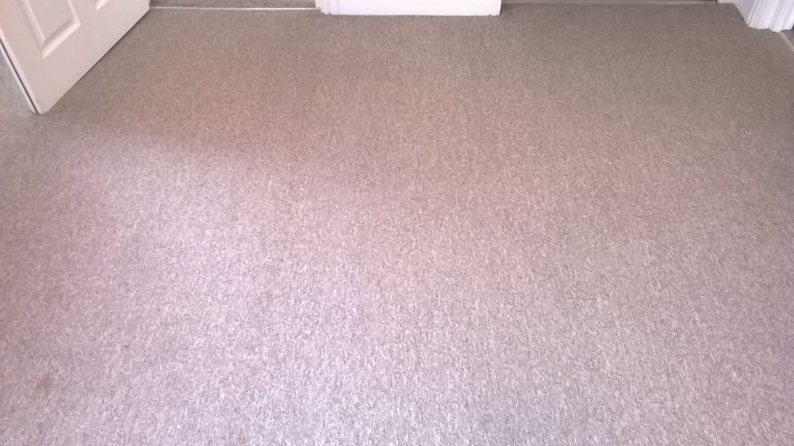 Carpet after LDM Services had cleaned it